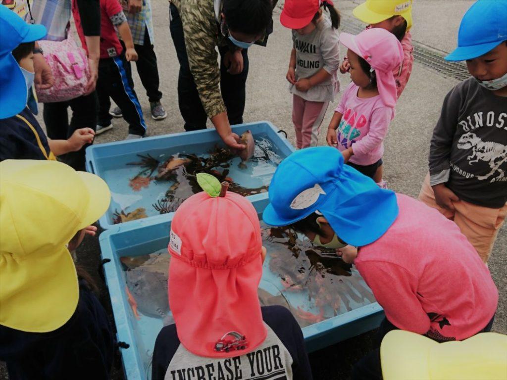 楽しそうに魚と触れ合う保育所園児