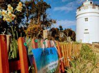 菅島灯台と水仙花壇