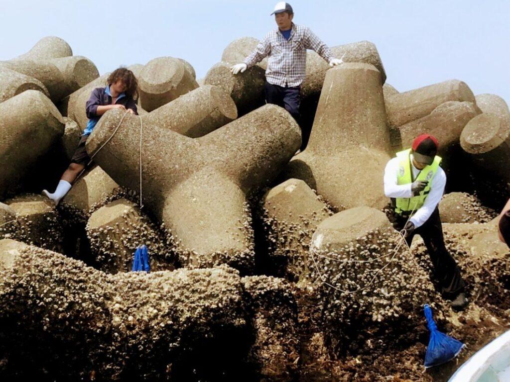 2021年ヒジキ増殖事業のヒジキを入れた網を吊るす作業