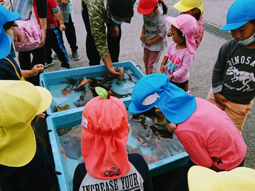 小学校の魚職体験授業で出現したミニ水族館で魚と触れ合う保育所園児
